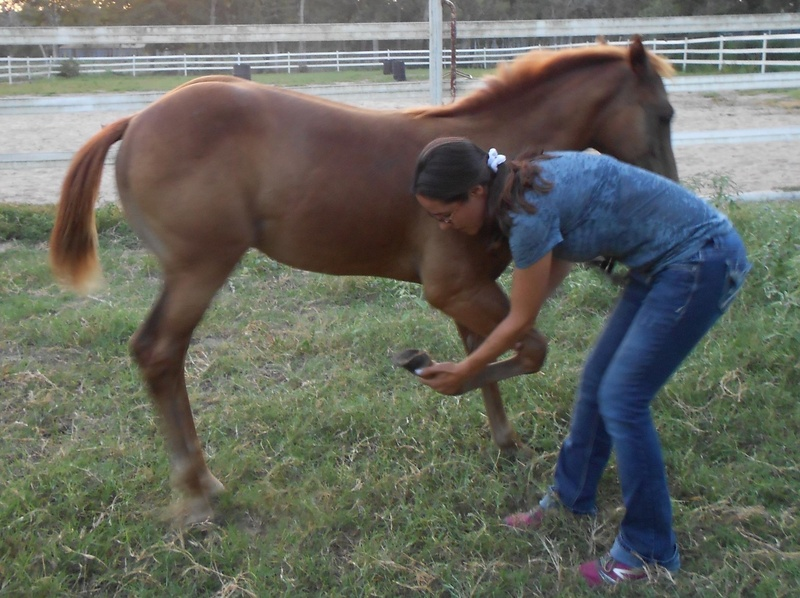 April learning to lift her hooves